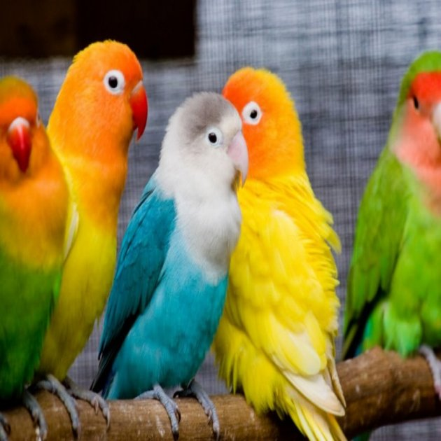 pos system  POS software for pet stores